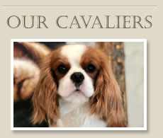 Our Cavaliers